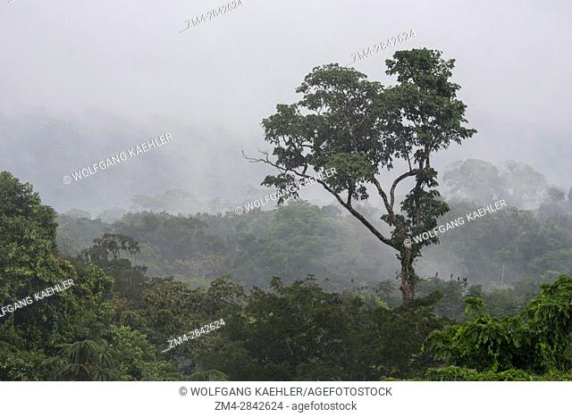 View from the observation tower of rising mist from the rain forest canopy in the rain forest near La Selva Lodge near Coca, Ecuador