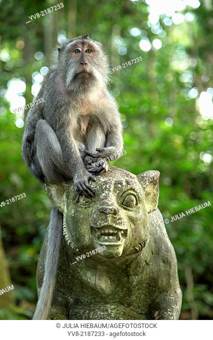 A long tailed macaque on top of a statue inside Ubud monkey forest, Bali