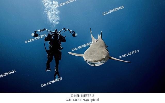 Scuba diver swimming with lemon shark, underwater view