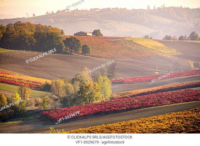 Lambrusco Grasparossa Vineyards in autumn. Castelvetro di Modena, Emilia Romagna, Italy