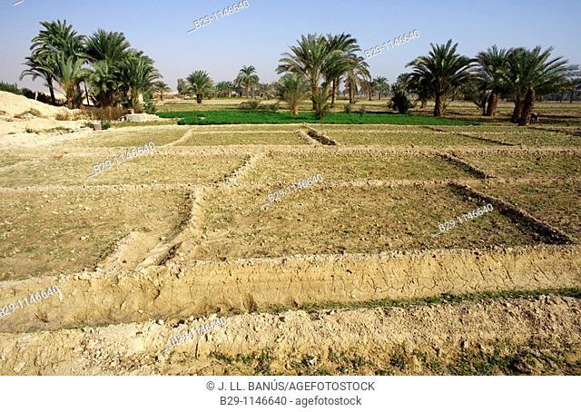 fields in Egypt Oxyrhynchus