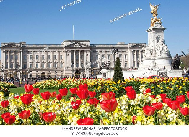 Buckingham palace in the Spring time  London  England