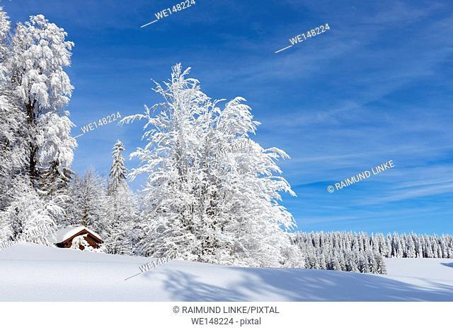 Snow covered winter landscape with cottage, Schauinsland, Black Forest, Freiburg im Breisgau, Baden Wurttemberg, Germany