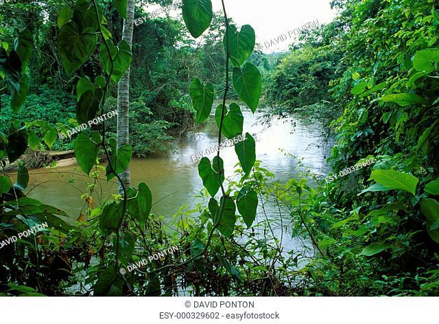 Rainforest in Belize