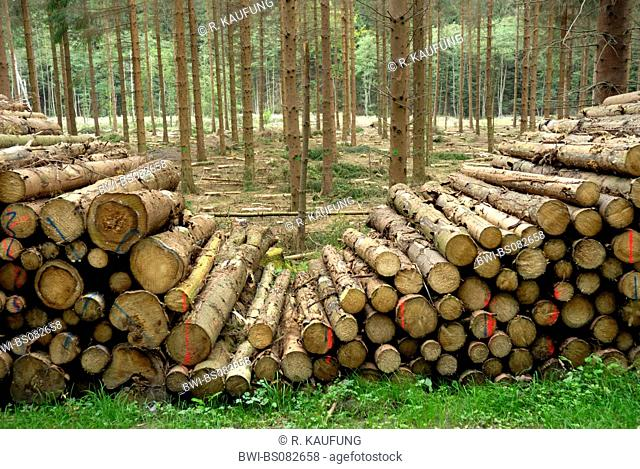 Norway spruce (Picea abies), accumulation of trunks, Germany, North Rhine-Westphalia, Sauerland