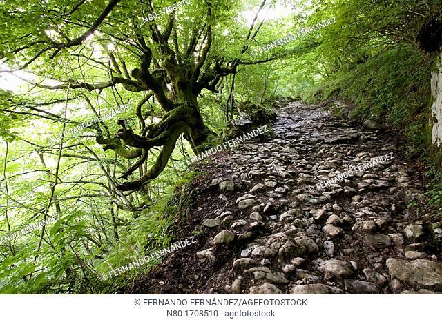 Senda del Arcediano  Parque Nacional Picos de Europa  Amieva  Asturias  Spain