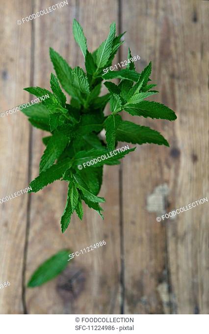 Fresh peppermint (Mentha piperita)