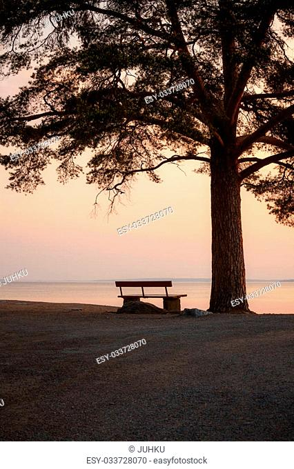 Bench and tree silhouette viewing to serene lake at dawn