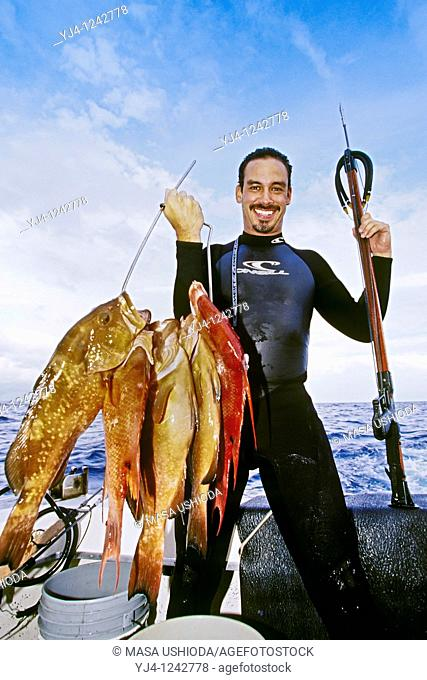 spearfisherman with good catches of red groupers, Epinephelus morio, and hogfish, Lachnolaimus maximus, off Tampa, Florida, USA, Gulf of Mexico, Caribbean Sea