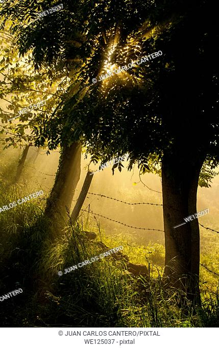 Rural Dawn in Ramales de la Victoria. Cantabria. Spain. Europe