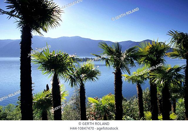 Switzerland, Europe, Canton Ticino, Lago Maggiore, Lake, Ronco sopra Ascona, palms, Brissago islands, islands, isles