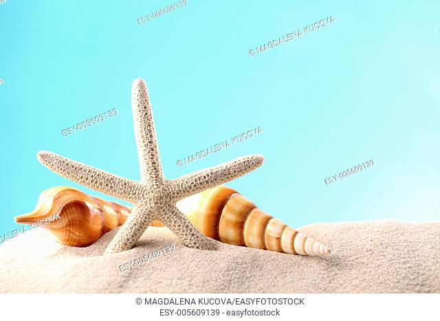 Starfish and seashells on sand with copy space