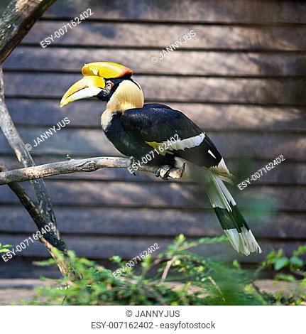 toucan bird at the zoo