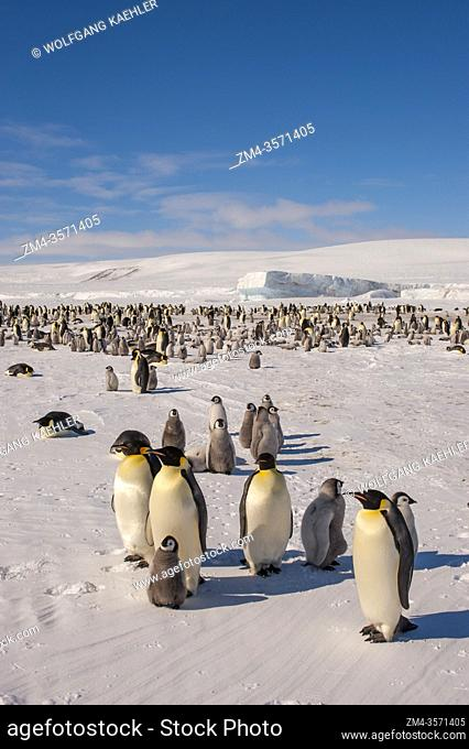 View of an Emperor penguin (Aptenodytes forsteri) colony on the sea ice at Snow Hill Island in the Weddell Sea in Antarctica