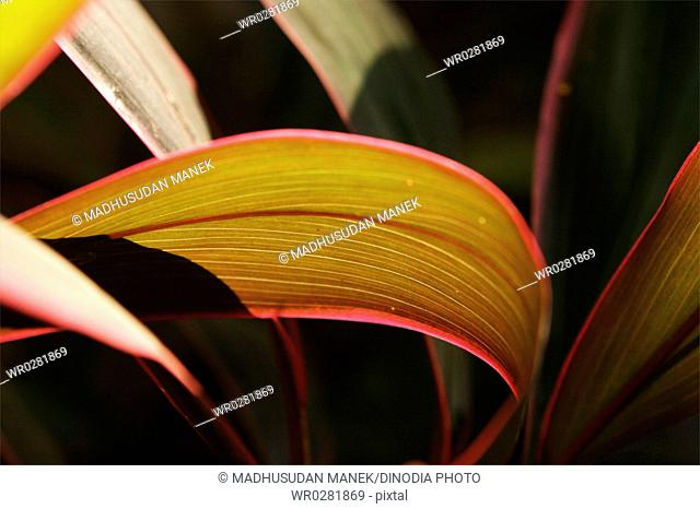 Red and green ornamental leaves