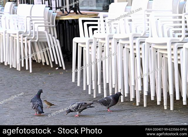 07 April 2020, Hessen, Bad Hersfeld: Three pigeons and a sparrow search the floor in front of stacked chairs of an ice-cream parlour for crumbs