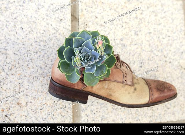 Old shoes reused as flowerpot and attached on outdoor wall. Fun decoration ideas