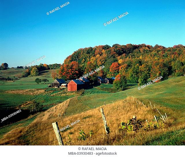usa, Vermont, Woodstock, farm, autumn, North America, hill-landscape, landscape, fields, meadows, forest-edge, farm, farmstead, autumnal, season, nature, idyll