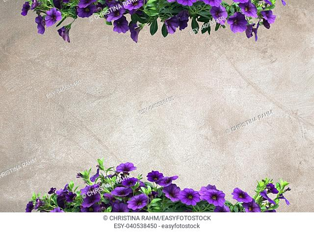 Purple petunias on warm neutral oil painting canvas background copy space texture