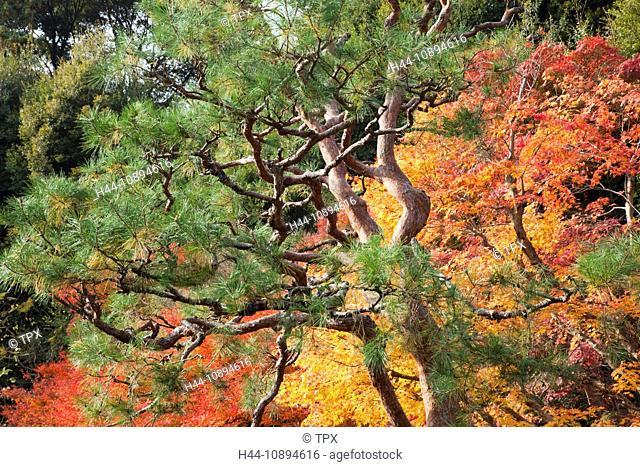 Asia, Japan, Honshu, Kyoto, Arashiyama, Nison-in Temple, Temple, Temples, Seasons, Autumn, Fall, Autumn Leaves, Autumn Colours, Autumn Foliage, Foliage