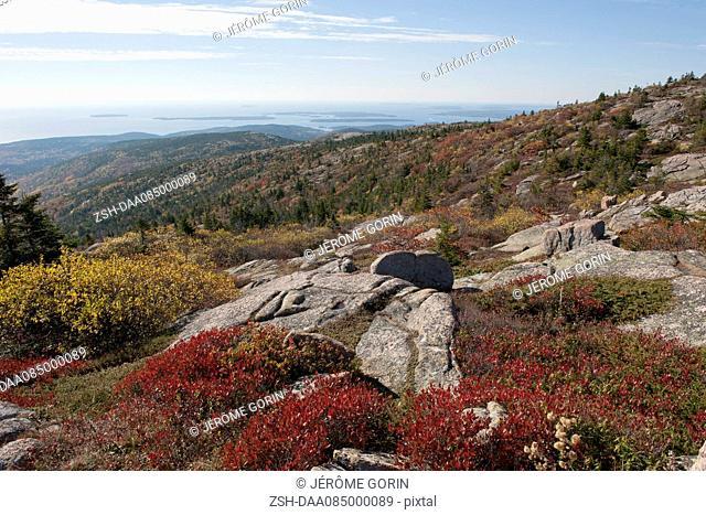 Coastal hillside, Acadia National Park, Maine, USA
