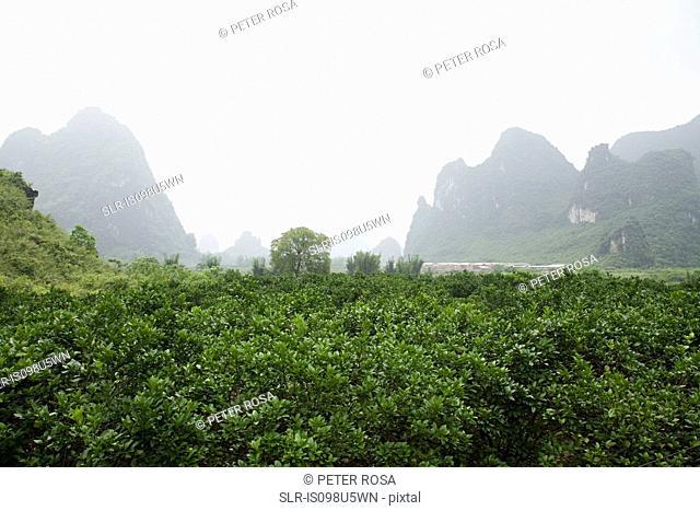 China, guangxi province, yangshuo landscape