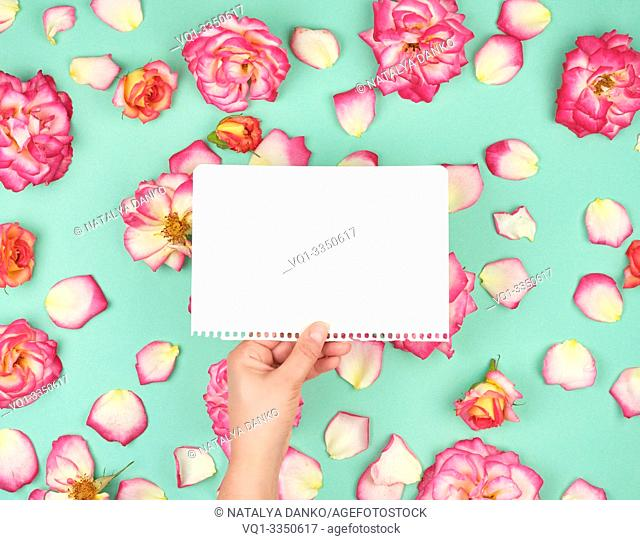 hand holding a blank white sheet torn from a notepad on the background of blooming rosebuds, festive background