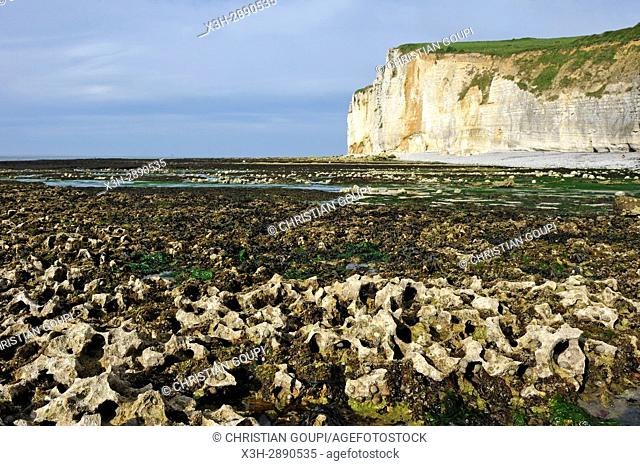 low tide near Etretat, Seine Maritime department, Normandy region, France, Europe