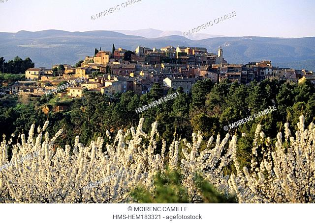France, Vaucluse, Luberon, Roussillon, labelled Les Plus Beaux Villages de France The Most Beautiful Villages of France cherry trees in bloom