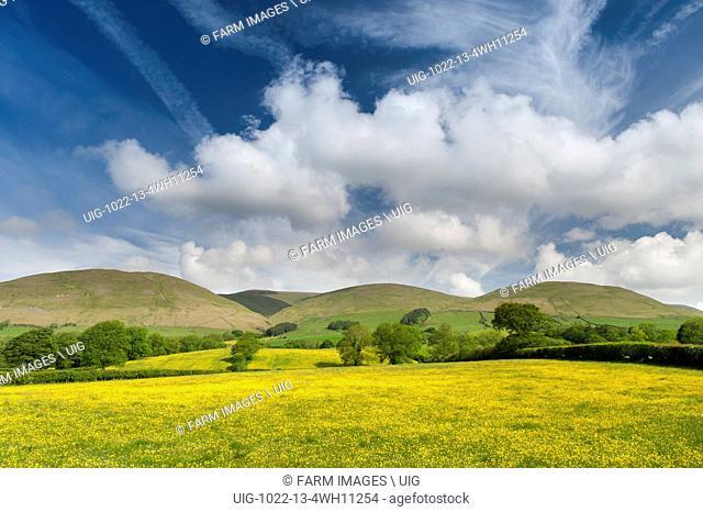 Wildflower meadow in full bloom near Sedbergh, Cumbria, with the Howgill fells under a dramatic summer sky. UK. (Photo by: Wayne Hutchinson/Farm Images/UIG)