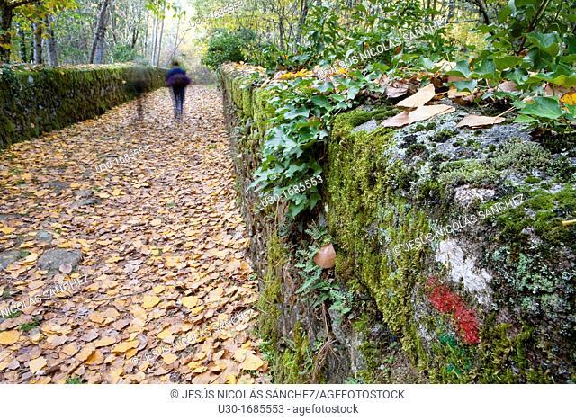 People walking a GR footpath over a old stone bridge in a forest in autumn  Sierra de Francia  Biosphere Reserve of Sierra de Béjar and Francia