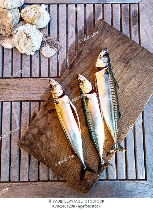 Mackerel fish, Grebbestad, bohuslan region, west coast, Sweden