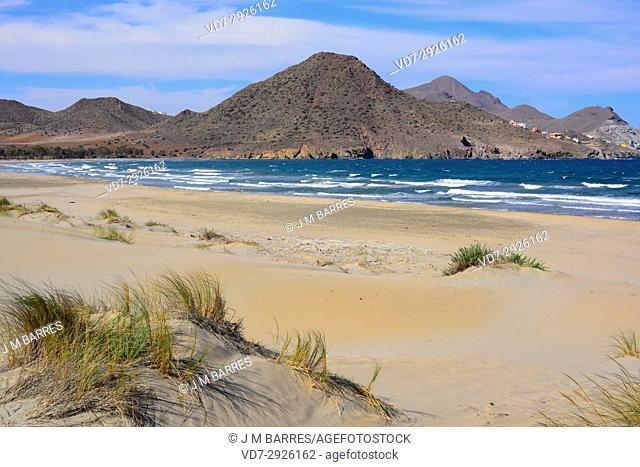 Ensenada de los Genoveses, beach and dunes. Cabo de Gata-Nijar Naturall Park, Almeria province, Andalucia, Spain
