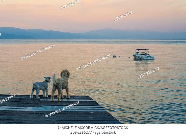 Two dogs gaze across the lake in the dawn light