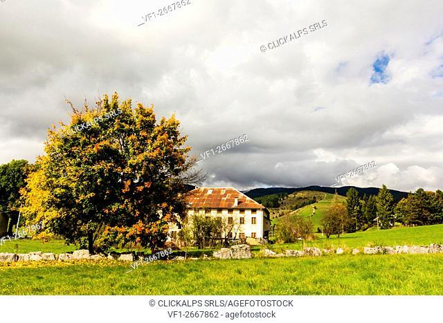 Altopiano of Asiago, Province of Vicenza, Veneto, Italy. Farmhouse with beech tree during autumn