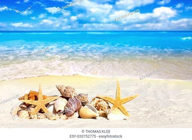 Verschiedene Muscheln liegen am sonnigen Strand