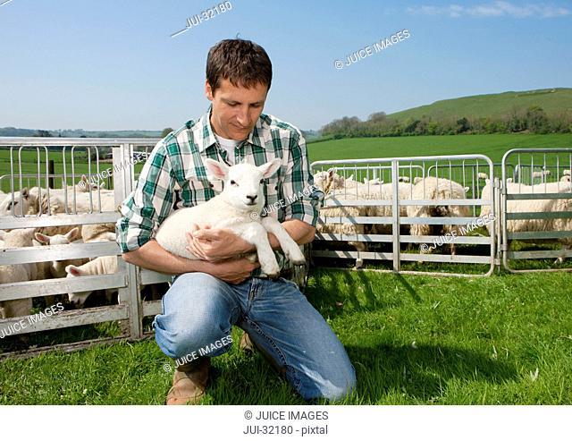 Shepherd holding lamb in pasture