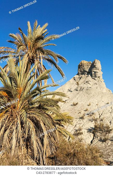 Bare ridges of eroded sandstone and palm trees in the Tabernas Desert, Europe's only true desert. Almeria province, Andalusia, Spain