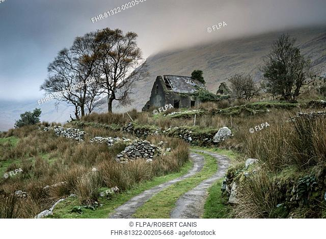 View of drystone walls and abandoned farmhouse, Black Valley, Macgillycuddy's Reeks, Killarney, County Kerry, Munster, Ireland, November