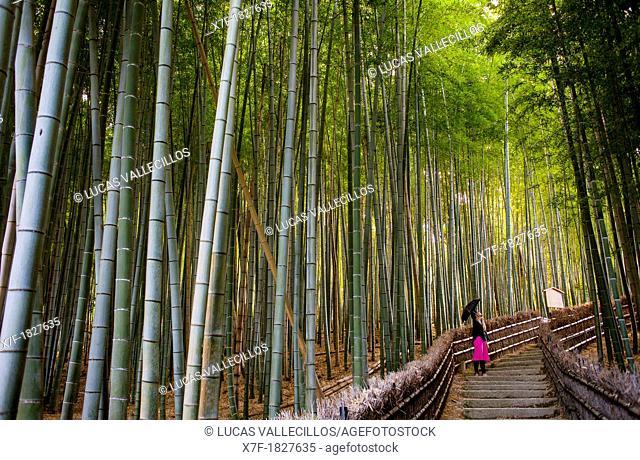 Bamboo forest, in Adashino Nembutsu ji temple , Arashiyama, Kyoto