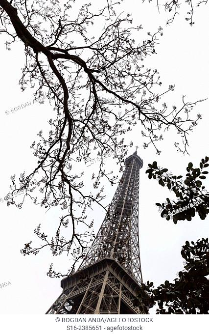 Paris, France - Eiffel Tour seen through bare tree branches during winter time