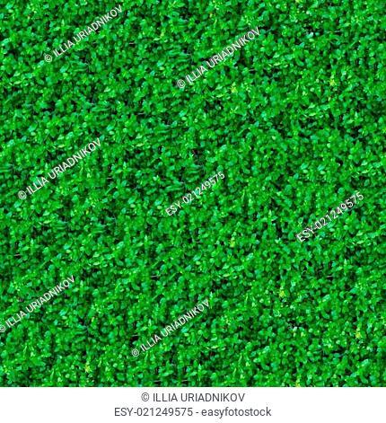 Seamless Texture. Green Meadow Grass