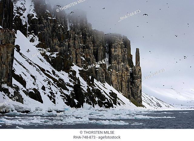 Bird Cliff, Bruennich's guillemots Uria lomvia, Spitsbergen, Svalbard, Norway, Scandinavia, Europe