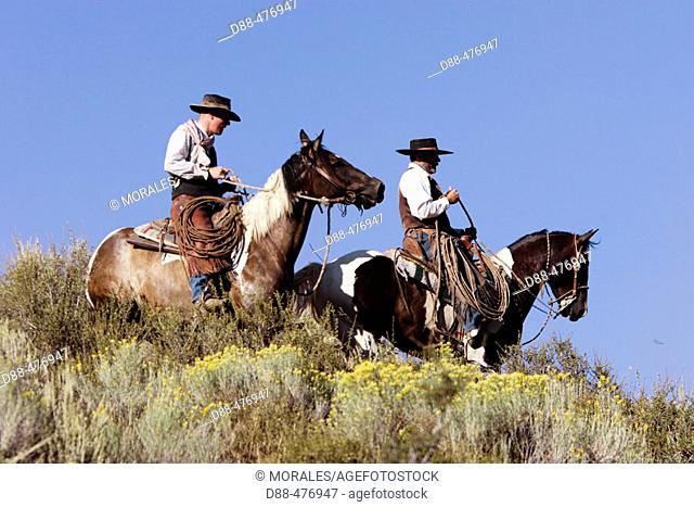 Cattlemen with 'Quarter horse' and/or 'Paint' of USA. Ponderosa Ranch. Seneca. Oregon . USA