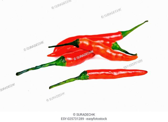 Red hot spicy chili pepper (Also named as chile pepper, Capsicum annuum, Capsicum frutescens, Capsicum chinense, Capsicum Chili, Capsicum pubescens