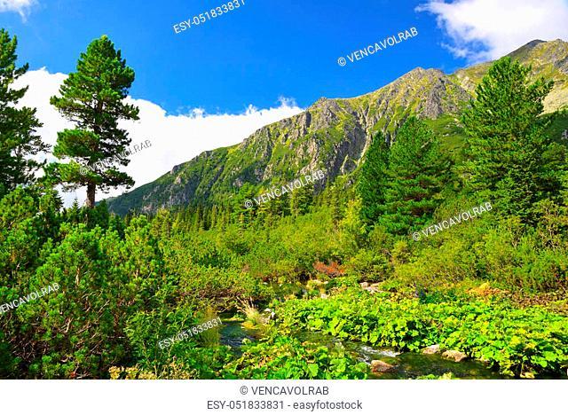 Mountain stream flowing from Poprad tarn, Mengusovska Valley in High Tatras, Slovakia