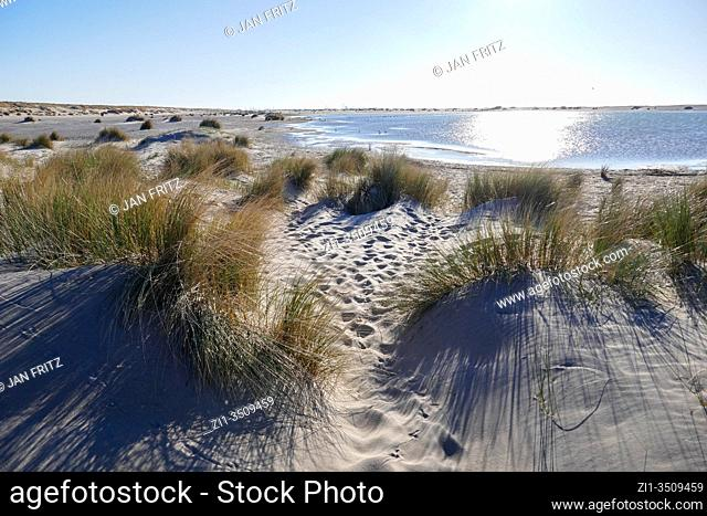 newly formed dunes at the zandmotor in Den Haag, Holland