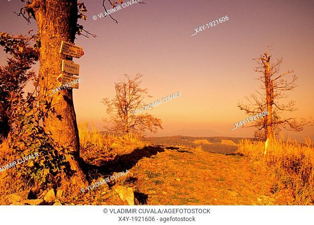 Solitary tree on the summit of Skalnata used as tourist signpost, Male Karpaty, Slovakia