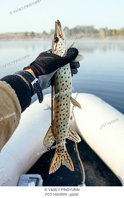 Cropped hand of man holding trout in inflatable raft at river