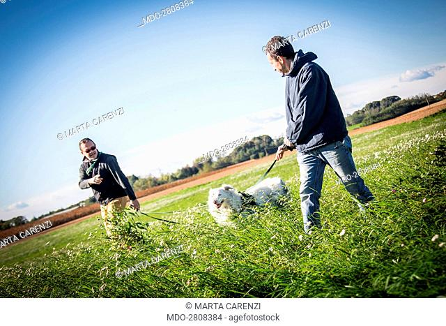Two men walking on the grass with an Australian shepherd dog on the leash. Casatenovo (Italy), 22nd October 2014
